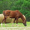 Peacefully Grazing by Debbie Portwood