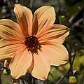 Peach Flower by Sally Weigand