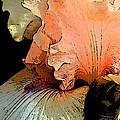 Peach Iris Digital Art by Phyllis Denton