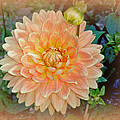 Peachy Keen Dahlia by Mother Nature