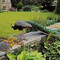 Peacock In Formal Garden, Kilmokea, Co by The Irish Image Collection