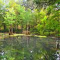 Peacock Springs State Park by Barbara Bowen