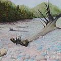 Pebble Beach by Carleigh Duncan-Doyle