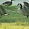 Pecking Order by Debbie Sikes