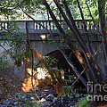Pedestrian Bridge And Strawberry Creek  . 7d10132 by Wingsdomain Art and Photography