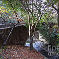 Pedestrian Bridge And Strawberry Creek  . 7d10152 by Wingsdomain Art and Photography