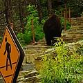 Pedestrian Crossing My Big Bear Booty by Jeff Swan