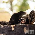 Peek-a-boo by Beth Engel