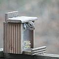 Peek-a-boo by Bob Donovan