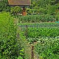 Peeking Into A Garden by Dave Mills
