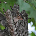 Peep Eye - C0331a by Paul Lyndon Phillips