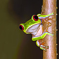 Peepers by Tony Beck