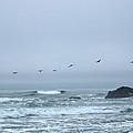 Pelican 2 Oregon Coast by Linda Hutchins