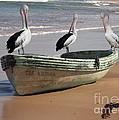 Pelican Heaven by Brian Gunter