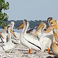 Pelican Island by Jane Coenen