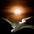Pelican Moon by Randall Branham