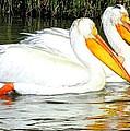 Pelican Pair by Judy Garrett