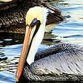 Pelican Pete by Karen Wiles