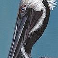 Pelican by Rosie Phillips