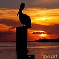 Pelican Sundown by Karen Wiles