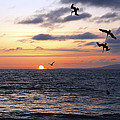 Pelicans Diving At Sunset by Artistic Photos
