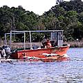 Pelicans Following Boat by Marilyn Holkham