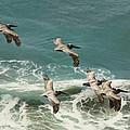 Pelicans In Flight Over Surf by Gregory Scott