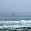 Pelicans by Linda Hutchins