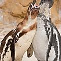 Penguin by Tom Gowanlock