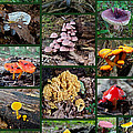 Pennsylvania Mushrooms Collage 2 by Mother Nature