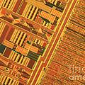 Pentium Computer Chip by Michael W. Davidson