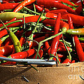 Peppers And More Peppers by Susan Herber