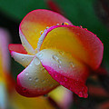 Perfect Colour by Josiah  St Jean