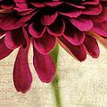 Petales De Fleurs by Darren Fisher