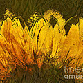 Petales De Soleil - A43t02b by Variance Collections