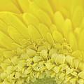 Petals by Cheryl Butler