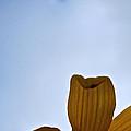 Petals Rising by Susan Herber