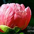 Petals Up by Susan Herber