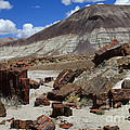 Petrified Forest 2 by Bob Christopher