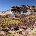 Petrified Forest Badlands by Adam Jewell