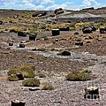 Petrified Forest National Park 2 by Tommy Anderson