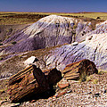 Petrified Logs In The Badlands by Adam Jewell