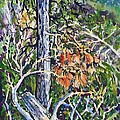 Petroglyph Pines by Lynne Haines