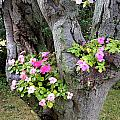 Petunia Tree by Mike Nellums