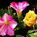 Petunias With A Rosy Neighbor by Cathy Sosnowski