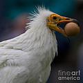 Pharaos Chicken  by Heiko Koehrer-Wagner