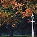Phoenix Park, Dublin, Co Dublin by The Irish Image Collection