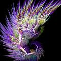 Phoenix's Wing by Lourry Legarde