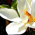 Photo For Sydneys Magnolia Painting by Roena King