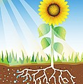 Photosynthesis, Artwork by David Nicholls